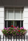 Sash window with window box. A beautiful window box sits outside a white sash window Stock Image