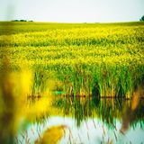 Sask scenery. Field and stream Stock Image