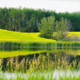 Sask scenery. Field and stream Stock Photos