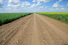 Saskatchewan Country Road. A dirt road in Saskatchewan farmland running between immature duram wheat and canola crops stock images
