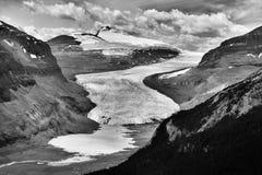Saskatchewan glaciär Arkivbild