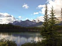 Saskatchewan River banff national park canada. Mountain and snow Stock Images