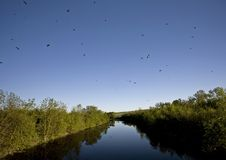 Saskatchewan River and Swallows. Saskatchewan River and Flock of Swallows near bridge Royalty Free Stock Image