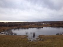 Saskatchewan-wild lebende Tiere Stockbilder