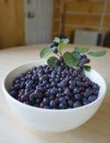 Saskatoon Berries Stock Images