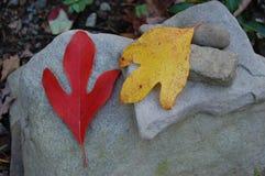 Sassafras leaves at Glen Angeli - the Johnson-Medland & Sons Tree Farm stock photos