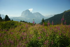 Sassolungo - Dolomit Stockfotografie
