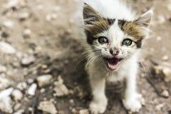 Sassy кот Стоковое Изображение RF