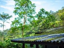 Satélite en el tejado en la selva foto de archivo