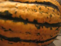 Sat09Oct2004Food - Squash and pumpkin from East Van Farmers' Market - 7 Royalty Free Stock Photos