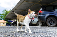 Satanding cat Stock Photography