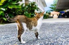 Satanding katt Royaltyfria Foton