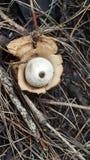 Sataniczny oko Zdjęcia Royalty Free