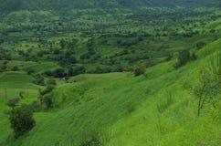 Satara Green meadows Royalty Free Stock Photos