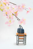Satchel and cherry blossoms on white background. Royalty Free Stock Images