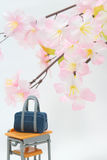Satchel and cherry blossoms on white background. Royalty Free Stock Photography