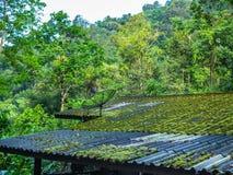 Satelita na dachu w dżungli zdjęcia stock