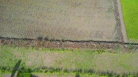 Satellietbeeld de Aziatische Landbouwers die rijst op padiegebied kweken in Azië stock video