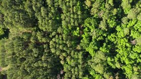 Satellietbeeld die over bebost gebied overgaan stock footage