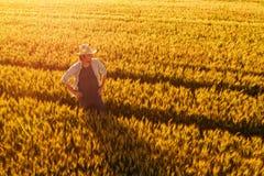 Satellietbeeld die van landbouwer zich op gouden rijp tarwegebied bevinden royalty-vrije stock foto