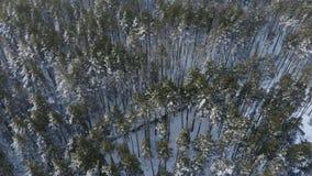 Satellietbeeld: het vliegen over pijnboomtreetops in sneeuw en ijs in de winterochtend die wordt behandeld stock videobeelden
