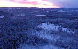 Satellietbeeld of hoogste mening van de winterbos, pijnboomboom met behandelde sneeuw De achtergrond van de winter royalty-vrije stock foto's