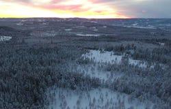 Satellietbeeld of hoogste mening van de winterbos, pijnboomboom met behandelde sneeuw De achtergrond van de winter royalty-vrije stock afbeelding