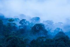 Satellietbeeld, Oud tropisch bos in de mist, mooi ochtendlicht De kunst van het vormen van een bos in regenachtig seizoen Blauwe  stock fotografie