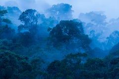 Satellietbeeld, Oud tropisch bos in de mist, mooi ochtendlicht De kunst van het vormen van een bos in regenachtig seizoen Blauwe  royalty-vrije stock afbeeldingen