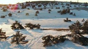 Satellietbeeld over de spectaculaire hellingen van de bergen met sparren schot De winterlandschap van pijnboombomen die groeien stock footage