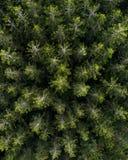 Satellietbeeld over een bos van de pijnboomboom stock afbeelding
