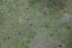 Satellietbeeld van Amerikaanse Bizon stock afbeelding