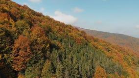 Satellietbeeld van Autumn Forest Orange Hill in de Karpatische Bergen stock footage