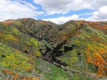 Satellietbeeld van Berg met de Gouden Papaver van Californië en Goudvelden die in Walker Canyon, Meer Elsinore, CA bloeien De V.S stock foto's