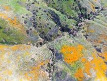 Satellietbeeld van Berg met de Gouden Papaver van Californië en Goudvelden die in Walker Canyon, Meer Elsinore, CA bloeien De V.S stock afbeeldingen