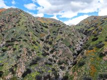 Satellietbeeld van Berg met de Gouden Papaver van Californië en Goudvelden die in Walker Canyon, Meer Elsinore, CA bloeien De V.S stock fotografie