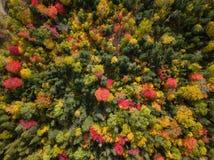 Satellietbeeld van Canadees Landschap tijdens Dalingsseizoen stock afbeeldingen