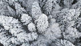 Satellietbeeld van een bos in een de winter bewolkte dag Mooie de winteraard van sparren en pijnboom in de sneeuw Het vliegen ove stock videobeelden