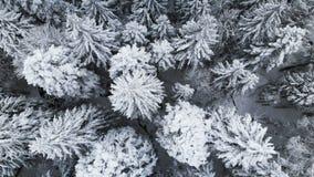 Satellietbeeld van een bos in een de winter bewolkte dag Mooie de winteraard van sparren en pijnboom in de sneeuw Het vliegen ove stock video
