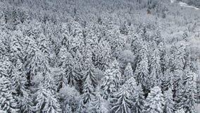 Satellietbeeld van een bos in een de winter bewolkte dag Mooie de winteraard van sparren en pijnboom in de sneeuw Het vliegen ove stock footage