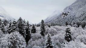Satellietbeeld van een bos in een de winter bewolkte dag Mooie de winteraard van sparren en pijnboom in de sneeuw Lage vlucht ove stock video