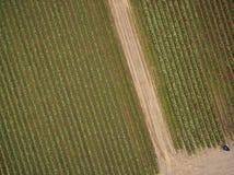 Satellietbeeld van een Fotograaf Shooting Rows van Tulpen stock afbeelding