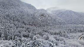 Satellietbeeld van een panoramabos in een de winter bewolkte dag Mooie de winteraard van sparren en pijnboom in de sneeuw flying stock video