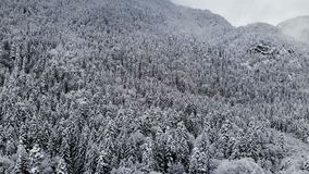 Satellietbeeld van een panoramabos in een de winter bewolkte dag Mooie de winteraard van sparren en pijnboom in de sneeuw flying stock videobeelden