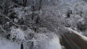 Satellietbeeld van een weg in een de winterbos op een bewolkte dag Een mooie de winterweg onder de aard van sparren en pijnboom b stock footage