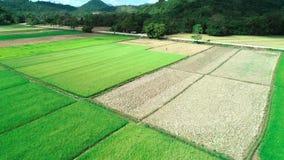 Satellietbeeld van groene rechthoekenpadievelden op zonnige dag Tropische landschapspadievelden, bergen, palmen farming stock videobeelden