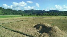Satellietbeeld van groene rechthoekenpadievelden op zonsondergang Tropische landschapspadievelden, bergen, palmen farming stock footage