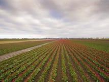 Satellietbeeld van Kleurrijke Tulip Fields van Skagit-Vallei, Washington stock foto's