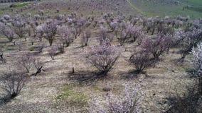 Satellietbeeld van landelijk Engels platteland van groene landbouwbedrijfgebieden, wildflower weiden en struiken schot Overweldig stock footage