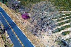 Satellietbeeld van landelijke weg met een gekleurde en droge boom stock foto
